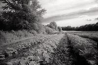 Farmed field<br />