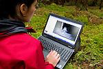 Scottish Wildcat (Felis silvestris grampia) biologist, Kerry Kilshaw, looking at camera trap image of a Scottish Wildcat, Scotland, United Kingdom