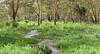 Wetland area, Lake Nakuru National Park, Kenya