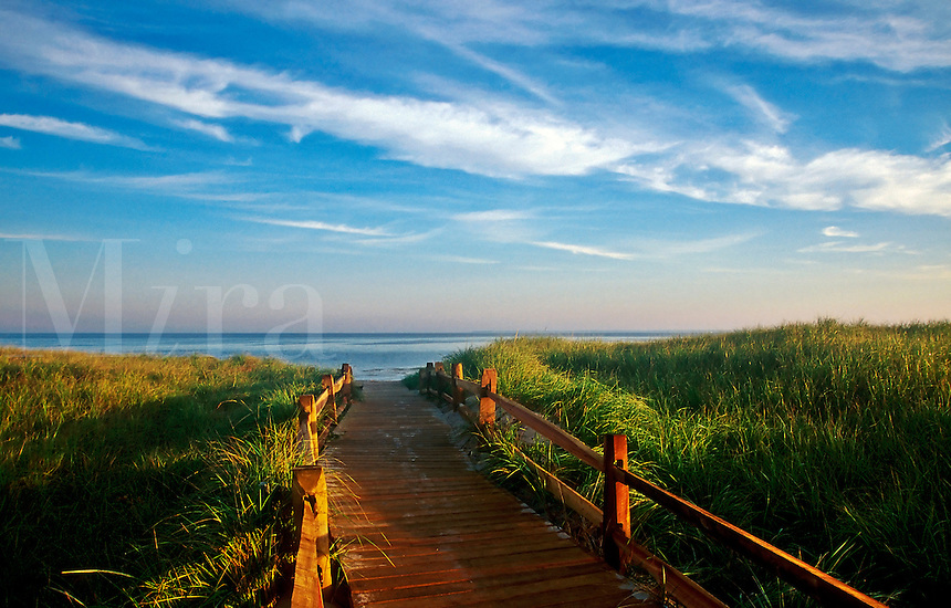 Walkway through dune grass to the beach, Brewster, Cape Cod