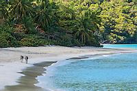Donkeys at Cinnamon Bay<br /> Virgin Islands National Park<br /> St John, US Virgin Islands