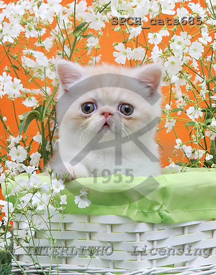 Xavier, ANIMALS, cats, photos, SPCHCATS685,#A# Katzen, gatos