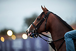 DEL MAR, CA - NOVEMBER 01:  Oscar Nominated, owned by Kenneth L. and Sarah K. Ramsey and trained by Michael J. Maker, exercises in preparation for Longines Breeders' Cup Turf at Del Mar Thoroughbred Club on November 01, 2017 in Del Mar, California. (Photo by Alex Evers/Eclipse Sportswire/Breeders Cup)