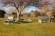 Empty benches next to a tree at Great Island Common in New Castle, New Hampshire, USA during the spring months.
