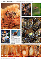 Order online: http://www.mannlakeltd.com/beekeeping-supplies/category/page141.html