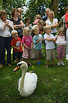 Swan Upping. Henley on Thames Berkshire England 2007. An adult swan with feet  tied waits to be given a health check. A group of children watch the other swans being weighed and measured.