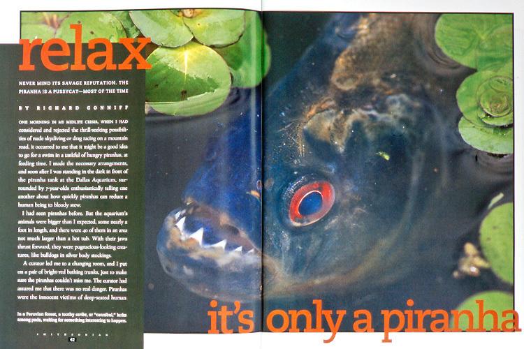 Magazine article about piranhas
