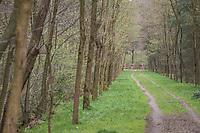 Team Trek-Segafredo seen through the forest<br /> <br /> 105th Scheldeprijs 2017 (1.HC)<br /> 1 Day Race: Mol › Schoten (BEL/202km)