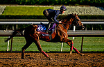 October 30, 2019: Breeders' Cup Filly & Mare Turf entrant Billesdon Brook, trained by Richard Hannon, exercises in preparation for the Breeders' Cup World Championships at Santa Anita Park in Arcadia, California on October 30, 2019. Scott Serio/Eclipse Sportswire/Breeders' Cup/CSM