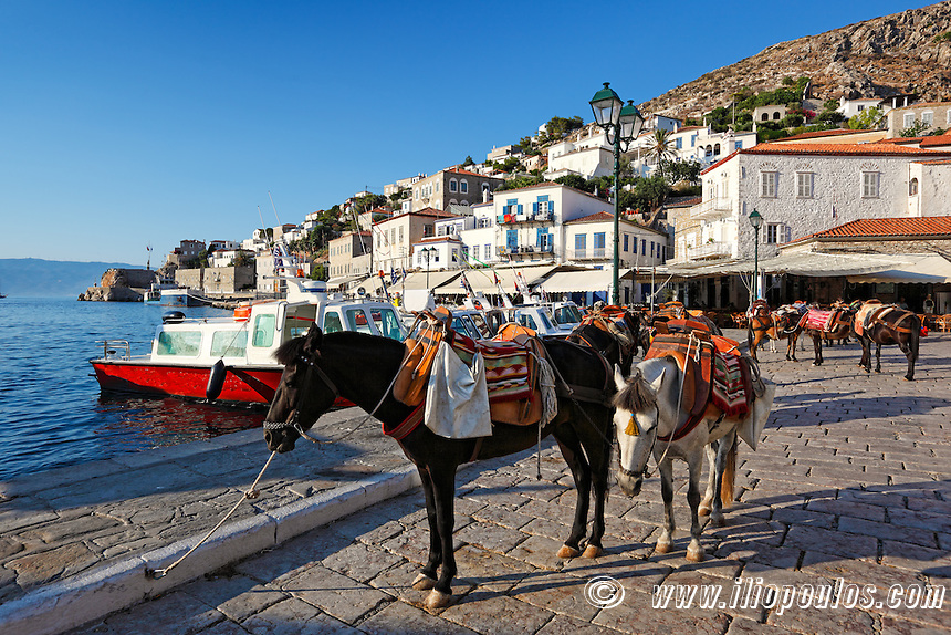 Mules are the only means of transportation in Hydra island, Greece