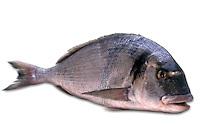 Fish. Pesce.