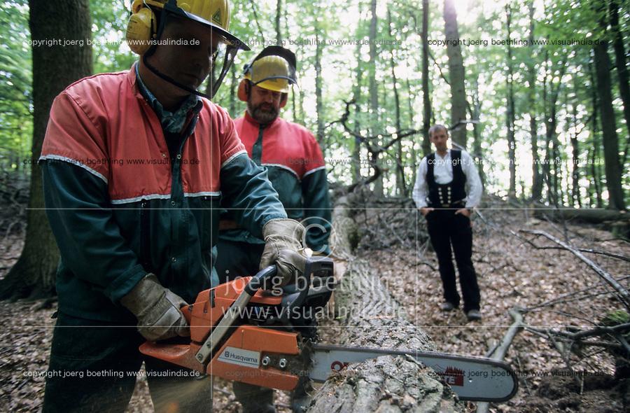 GERMANY, forestry, oak timber harvest / DEUTSCHLAND, Staatsforst bei Trittau, Forstwirtschaft, Holzernte, Forstarbeiter fällen Eichen mit Husqvarna Motorsäge