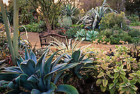 Bench by path with mature succulents at Ruth Bancroft Garden, Walnut Creek, California