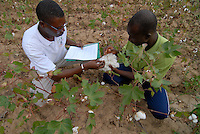 BURKINA FASO, organic cotton project, agricultural advisor at field / Burkina Faso, Helvetas fairtrade und Biobaumwolle Projekt - Mitarbeiter und Berater von Helvetas Burkina Faso bei Biofarmerin Pandé Kandja Sory im Dorf Nayagara bei Bobo Dioulasso