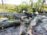 Westside Eagle Observer/RANDY MOLL<br /> Downed trees on Fairmount Road, east of Siloam Springs, caused the road to impassable until they were cleared following a late-night storm on Sunday (Oct. 20, 2019).