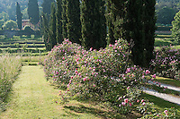 An avenue of cypress trees and old roses lines the approach to the villa
