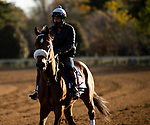 November 2, 2020: Owendale, trained by trainer Brad Cox, exercises in preparation for the Breeders' Cup Dirt Mile at Keeneland Racetrack in Lexington, Kentucky on November 2, 2020. Carolyn Simancik/Eclipse Sportswire/Breeders Cup