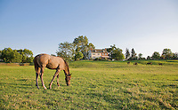 Brightview Horse Farm, New Jersey