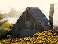 Cabin with setting sun and gorse wildflowers. Bandon. Oregon coast.