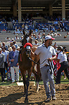 DEL MAR, CA  JULY 16: #8 Going to Vegas, ridden by Umberto Rispoli and owned in part by My Racehorse, exits the winners circle after winning the third race on July 16, 2021 at Del Mar Thoroughbred Club in Del Mar, Ca. (Photo by Casey Phillips/Eclipse Sportswire/CSM)