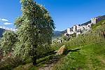 Italy, South Tyrol (Trentino - Alto Adige), Val Venosta, Schluderns (Italian: Sluderno): apple blossom and Castle Schluderns (Castel Coira) | Italien, Suedtirol (Trentino - Alto Adige), Vinschgau, Schluderns: die Churburg und Apfelbluete