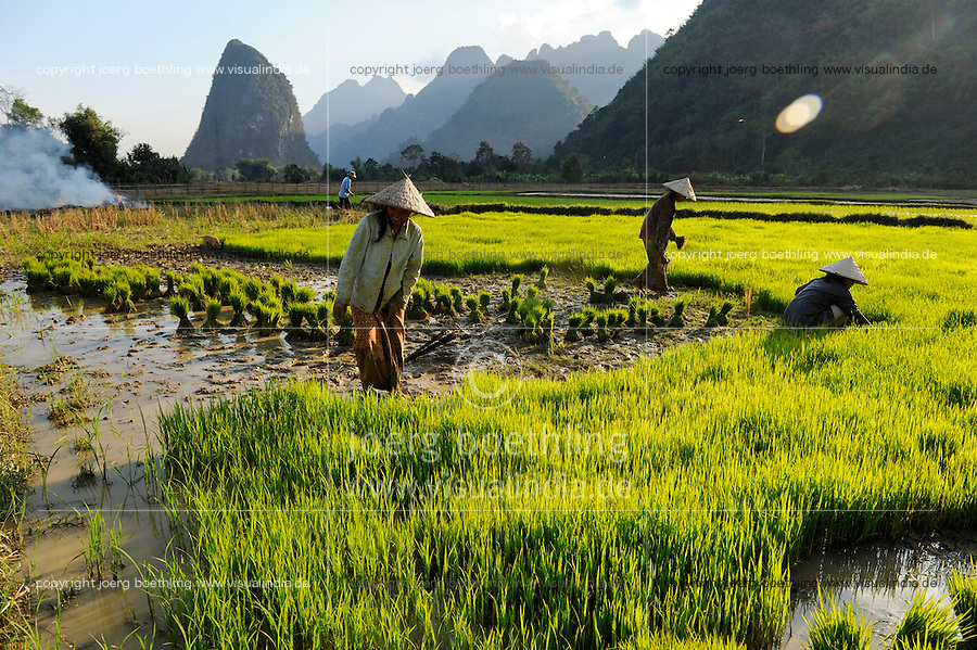 LAOS Vang Vieng , Reisfelder vor Kalkstein Bergkulisse , Frauen pflanzen Reissetzlinge um / LAOS Vang Vieng, paddy fields infront of limestone mountains , women replant rice plants