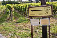 Vineyard. Domaine Charles Joguet, Clos de la Dioterie, Chinon, Loire, France