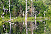 Wildlife Pond in Bethlehem, New Hampshire USA during the summer months