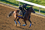 November 4, 2020: Authentic, trained by trainer Bob Baffert, exercises in preparation for the Breeders' Cup Classic at Keeneland Racetrack in Lexington, Kentucky on November 4, 2020. John Voorhees/Eclipse Sportswire/Breeders Cup/CSM