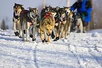 Cindy Galleas team arriving into Takotna Chkpt during 2006 Iditarod Takotna Alaska Interior Winter