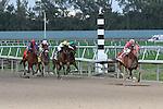Groupie Doll (KY) with jockey Rajiv Maragh  on board wins the Hurricane Bertie G3 Stakes at Gulfstream Park.  Hallandale Beach, Florida 02-09-2014