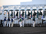 December 10, 2011.Horses in the starting gate before the Hollywood Starlet at Hollywood Park, Inglewood, CA