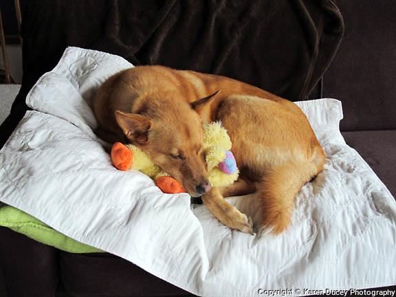 A sleeping dog lies in the sun.