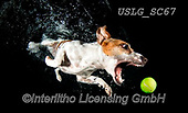 REALISTIC ANIMALS, REALISTISCHE TIERE, ANIMALES REALISTICOS, dogs, paintings+++++SethC_Stella_320B9767rev2,USLGSC67,#A#, EVERYDAY ,underwater dogs,photos,fotos ,Seth