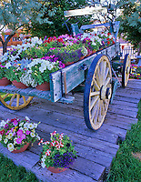Old wagon with petunias. Bridgeport Inn. Bridgeport, California.