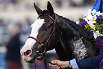 DEL MAR, CA - NOVEMBER 04: Talismanic won the Longines Breeders' Cup Turf race on Day 2 of the 2017 Breeders' Cup World Championships at Del Mar Racing Club on November 4, 2017 in Del Mar, California. (Photo by Jamey Price/Eclipse Sportswire/Breeders Cup)