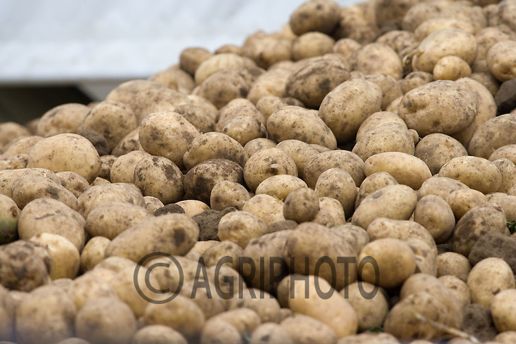 Grading Potatoes In Lincolnshire