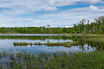 Wilderness lake in spring