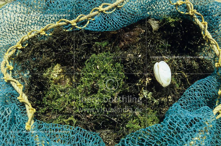INDIA, Tamil Nadu, Gulf of Mannar <br /> women of fishing village Valasai dive for seaweed for income generation , the algae is used for processing of Agar-agar or Carrageenan / INDIEN, Tamil Nadu, Golf von Mannar, Frauen des Fischerdorf Valasai tauchen nach Seealgen als zusaetzliche Einkommensquelle , aus den Rotalgen werden Agar Agar gewonnen
