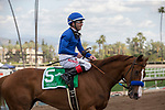 ARCADIA, CA  MARCH 24: #5 Selcourt, ridden by Tyler Baze, return to the connections after winning  the Santa rMonica Stakes at Santa Anita Park on March 24, 2018, in Arcadia, CA. (Photo by Casey Phillips/ Eclipse Sportswire/ Getty Images)