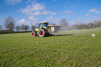 Spreading NPK onto grass cover crop - Lincolnshire, March