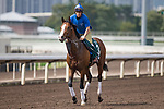 SHA TIN,HONG KONG-APRIL 28: Dicton,trained by ,prepares for  the Audemars Piguet QEII Cup at Sha Tin Racecourse on April 28,2017 in Sha Tin,New Territories,Hong Kong (Photo by Kaz Ishida/Eclipse Sportswire/Getty Images)