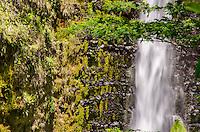A close-up of beautiful 'Akaka Falls on the Big Island of Hawai'i; the falls plummet 442 feet.