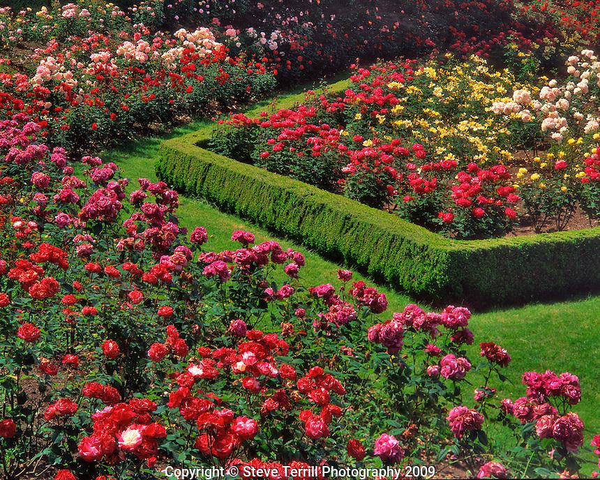 Rose Garden in Peninsula Park Portland Oregon