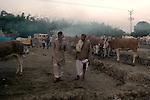 Animal buyers at Sonepur fair ground. Bihar, India, Arindam Mukherjee.