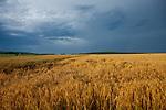 Europa, DEU, Deutschland, Hessen, Landkreis Fulda, Großenlueder, Landschaft, Agrarlandschaft, Regenwetter, Regenwolken, Kategorien und Themen, Natur, Umwelt, Landschaft, Jahreszeiten, Stimmungen, Landschaftsfotografie, Landschaften, Landschaftsphoto, Landschaftsphotographie, Wetter, Wetterelemente, Wetterlage, Wetterkunde, Witterung, Witterungsbedingungen, Wettererscheinungen, Meteorologie, Wettervorhersage<br /> <br /> [Fuer die Nutzung gelten die jeweils gueltigen Allgemeinen Liefer-und Geschaeftsbedingungen. Nutzung nur gegen Verwendungsmeldung und Nachweis. Download der AGB unter http://www.image-box.com oder werden auf Anfrage zugesendet. Freigabe ist vorher erforderlich. Jede Nutzung des Fotos ist honorarpflichtig gemaess derzeit gueltiger MFM Liste - Kontakt, Uwe Schmid-Fotografie, Duisburg, Tel. (+49).2065.677997, ..archiv@image-box.com, www.image-box.com]