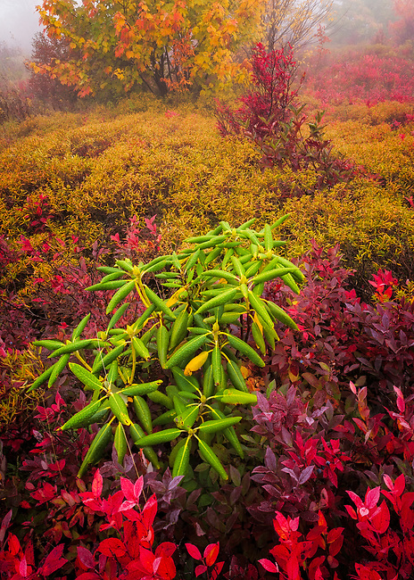 Autumn forest detail shrouded in fog, Graveyard Fields