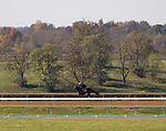 November 2, 2020: Aunt Pearl, trained by trainer Brad Cox, exercises in preparation for the Breeders' Cup Juvenile Fillies Turf at Keeneland Racetrack in Lexington, Kentucky on November 2, 2020. Carolyn Simancik/Eclipse Sportswire/Breeders Cup