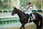 ROYAL DELTA, ridden by Mike Smith and trained by Bill Mott, wins the Breeders' Cup Ladies' Classic at Santa Anita Park in Arcadia, California on November 2, 2012.