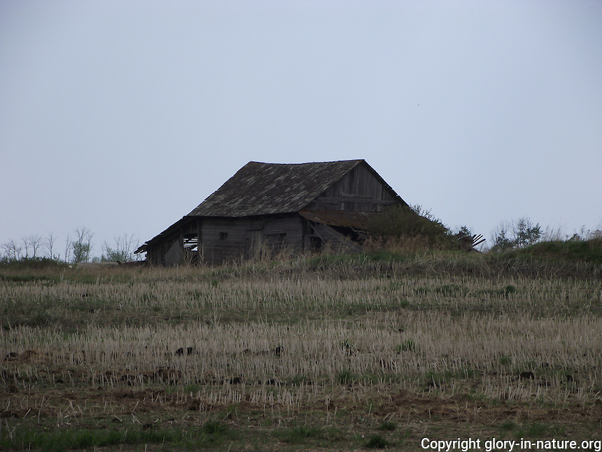Old abandoned barn gracing the landscape near the town of Smoky Lake.